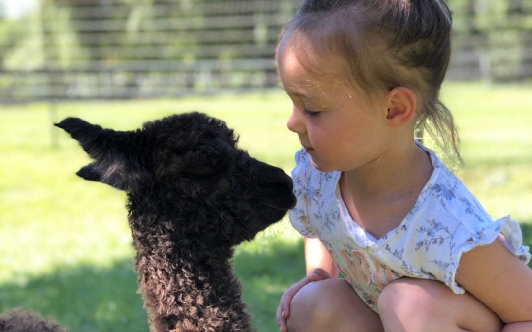 Family-Friendly Farms to Visit This Fall in Northern Michigan (Petting00 Zoos, Treats, Wine, More!)
