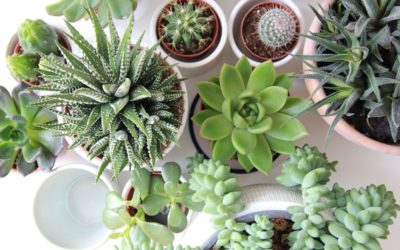 Succulents for Your Northern Michigan Home