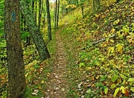264px-North_Country_Trail_Manistee_Forest