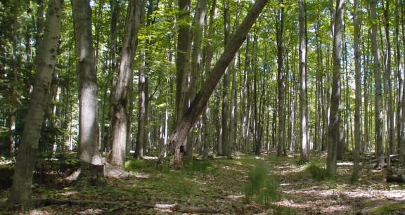 finton-woods
