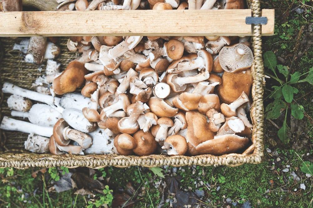 photo-by-todd-zawistowski_traverse-magazine_0911_fall-mushrooms_2