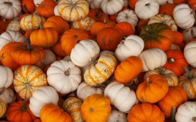 7 Northern Michigan Farms & Markets to Visit (Pumpkins!)