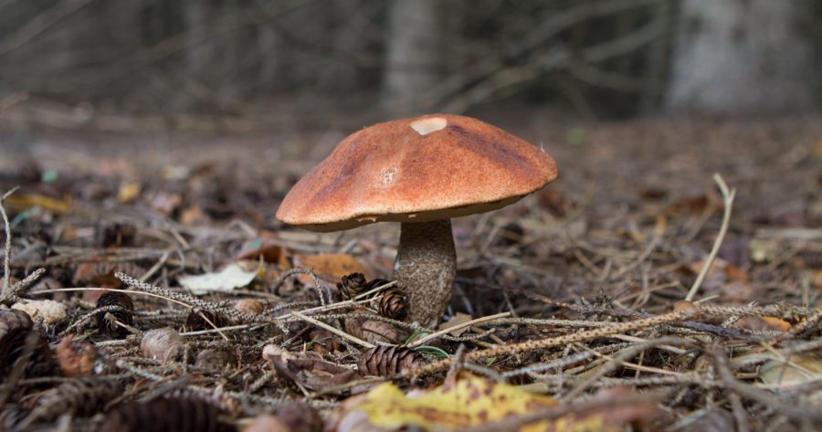 9. Autumn's Gourmet Forest: Fall Mushrooming in Northern Michigan