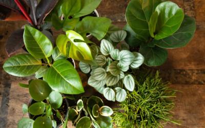 17 Cool Houseplants at Darling Botanical for Medium, Low Light