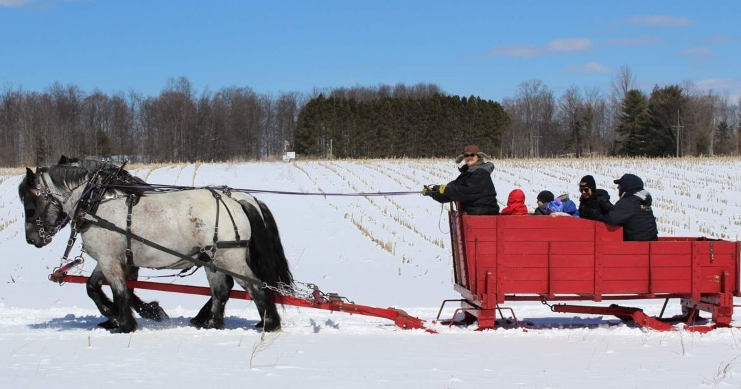 Experience a Snowy Sleigh Ride at Fantail Farm in Benzonia