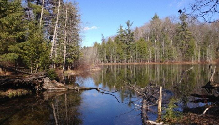 Ransom-Lake_Lake_Reflections_Nate-Richardson_4.153-800×600-700×400