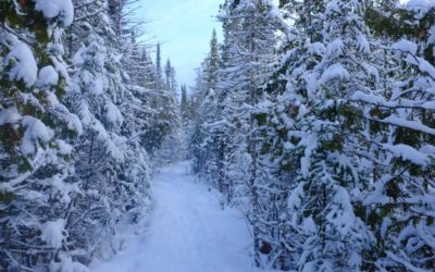 Winter Weekend Fun in Bellaire & Shanty Creek Off the Slopes