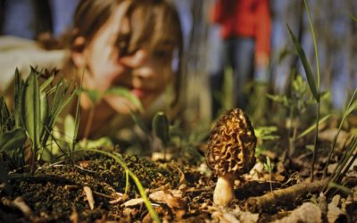 Mushroom Care 101: How to Store Morels