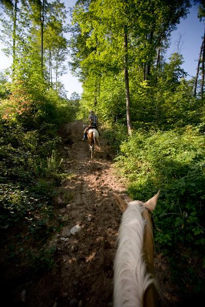 Horseback riding on a Northern Michigan trail.