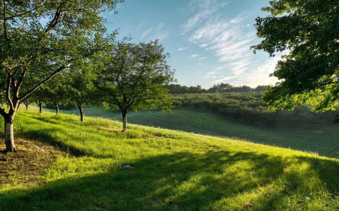 Picture of Bucolic farmland.