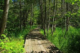 Grass River Natural Area Trails