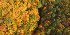 Fall Colors at M119 Tunnel of Trees