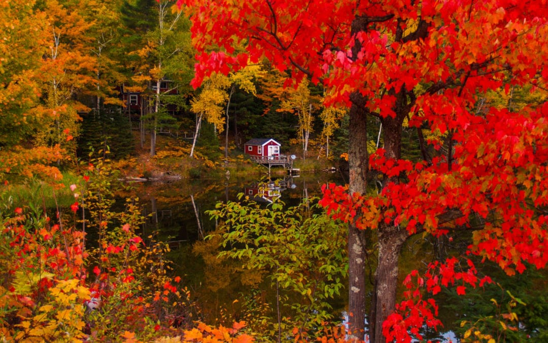 7 Ways to Get Outside & Celebrate Michigan's Fall Color
