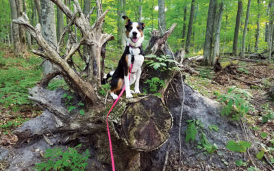 Best Dog-Friendly Trails at Northern Michigan Preserves
