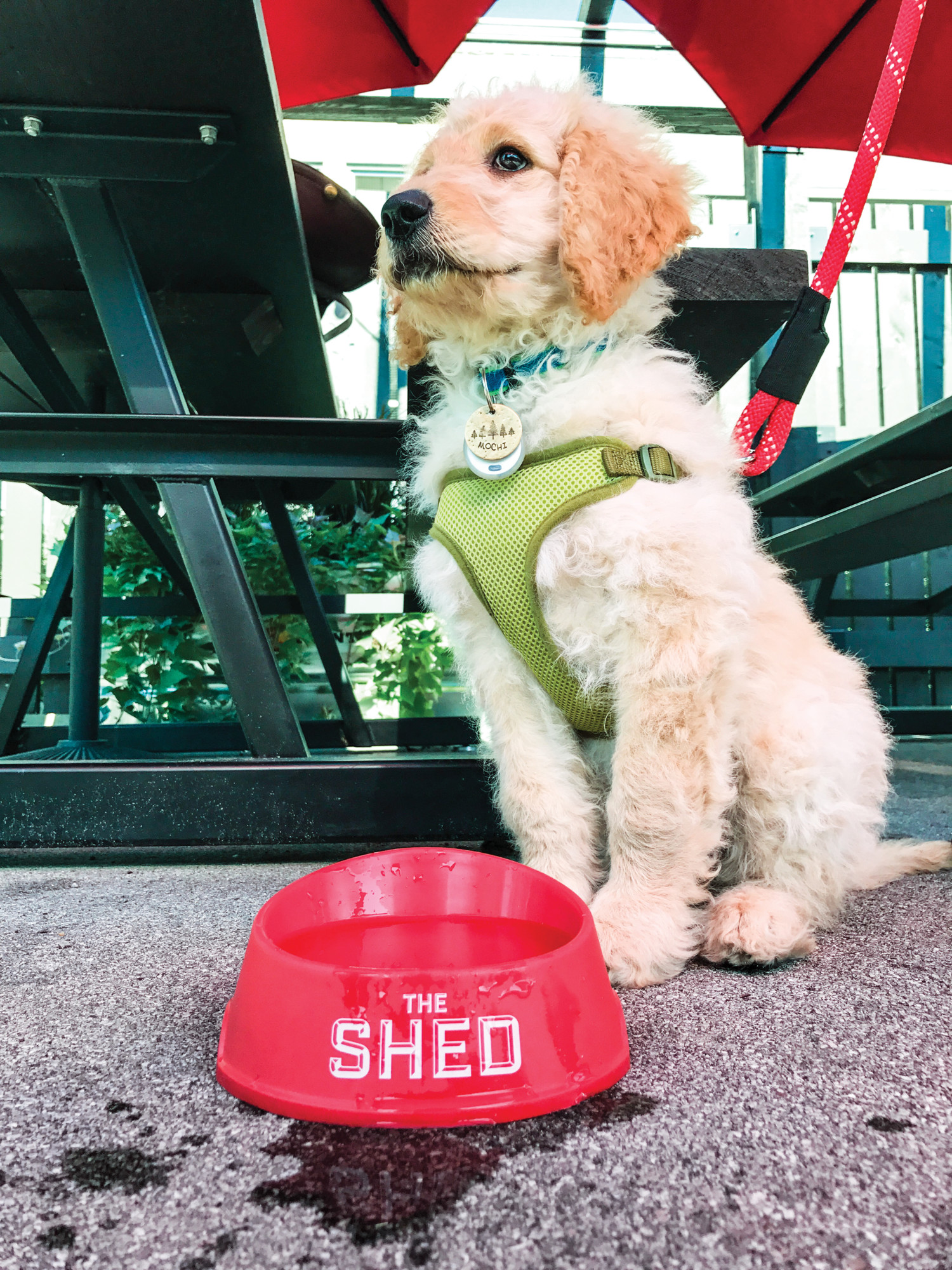 Dog at The Shed restaurant with water bowl.