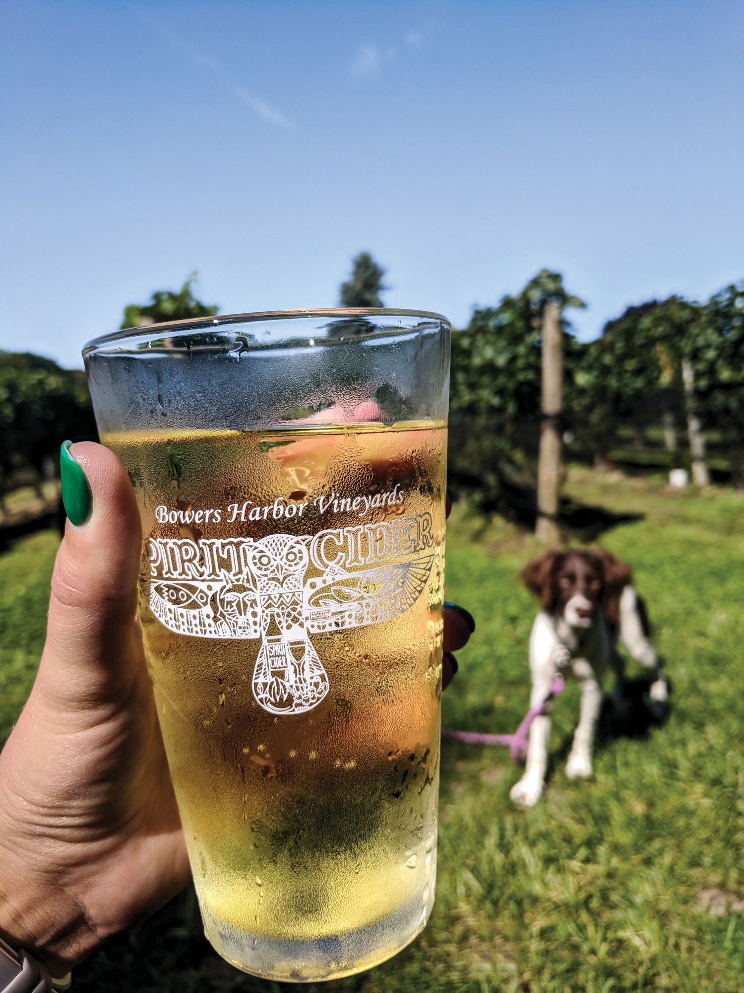 A pint of cider at Bower's Harbor Vineyards with a dog in the background.