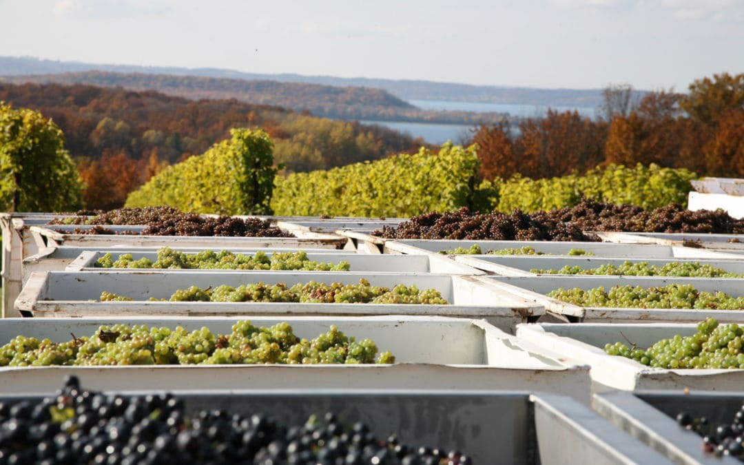Northern Michigan Winemakers Expecting High-Quality 2020 Vintage