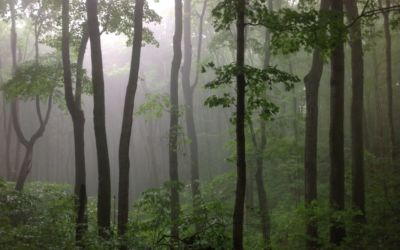 Grand Traverse Regional Land Conservancy Awarded for Stewardship