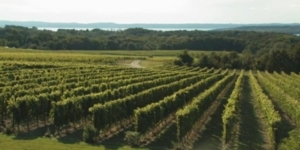 Chateau Grand Traverse Talks About Rieslings