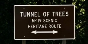 Drive Tunnel of Trees to Good Hart's Market Days