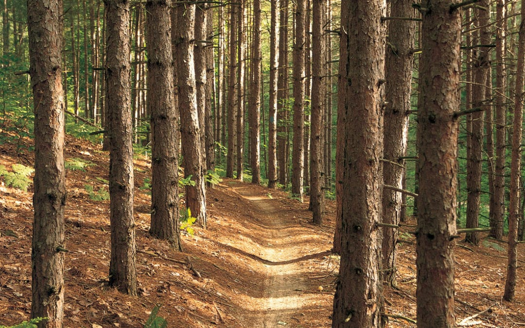 Picture of a trail in Northern Michigan.