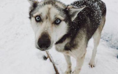 How to Go Dog Sledding in Michigan's Upper Peninsula