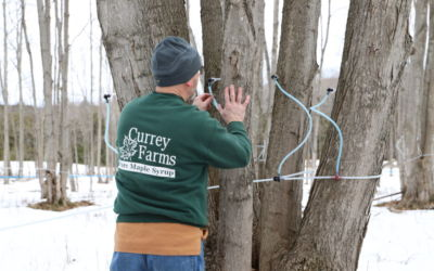 Tapping into a Legacy of Maple Syrup in Northern Michigan