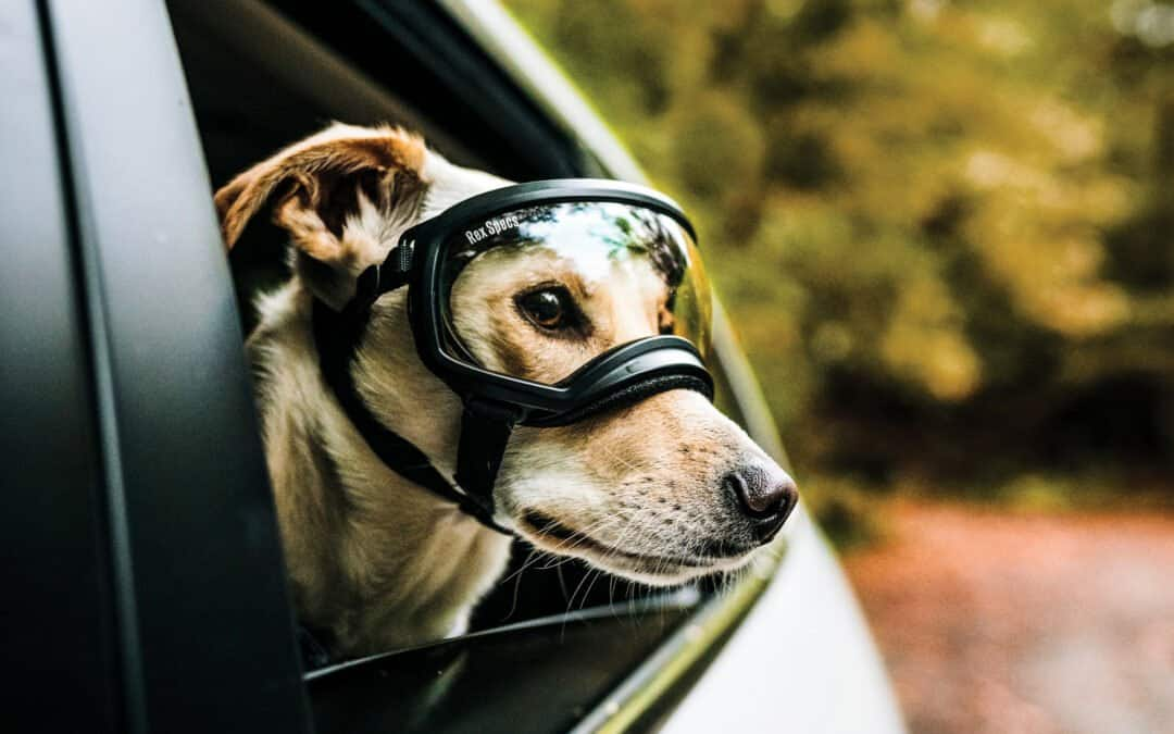 Dog looking outside of window with goggles on.