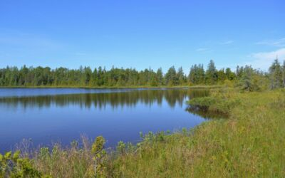 Signs of Spring at Gerstacker Preserve in the Upper Peninsula