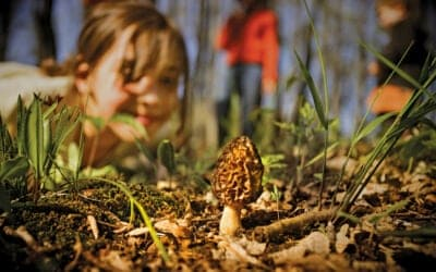 13 Morel Mushroom Hunting, Cooking & Cleaning Tips for Spring