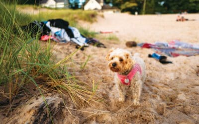 Dog Friendly Spots in the Ludington, Manistee & Cadillac Areas