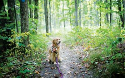 Charlevoix & Chain of Lakes Dog-Friendly Parks & Preserves