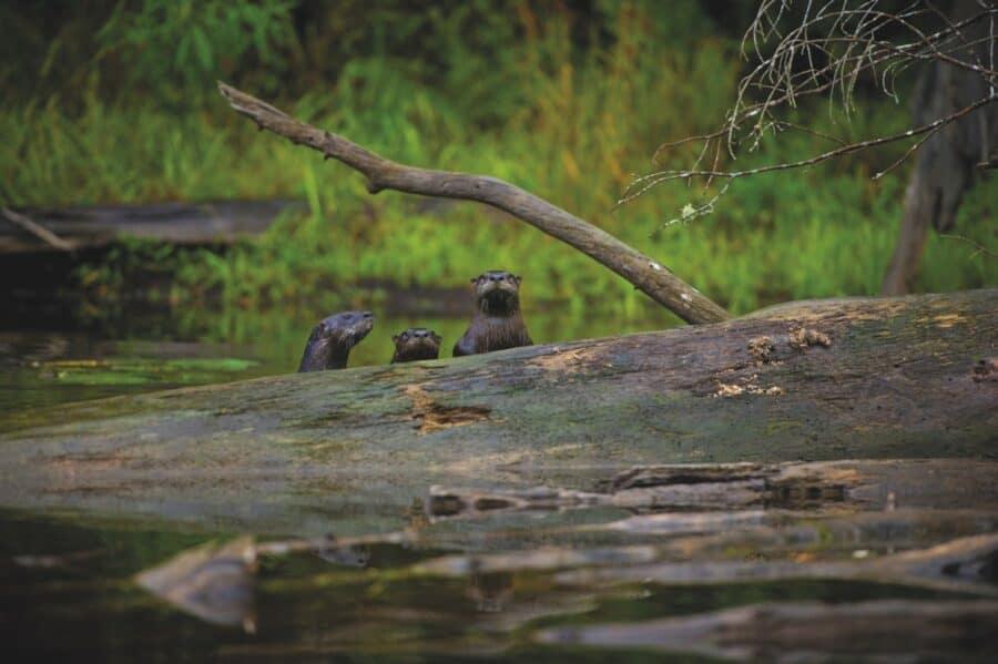tahquamenon falls state park, canoe, paddle, fall, aaron peterson