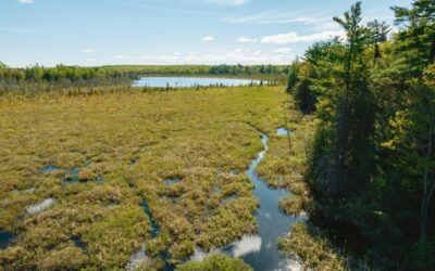 The Story Behind the UP's New Elise M. Kummer Nature Preserve