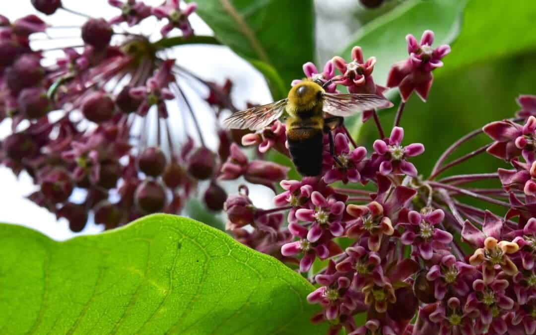 Bee landing on flower.