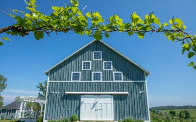 Vacation in a Vineyard at Gabriel Farms & Winery in Petoskey