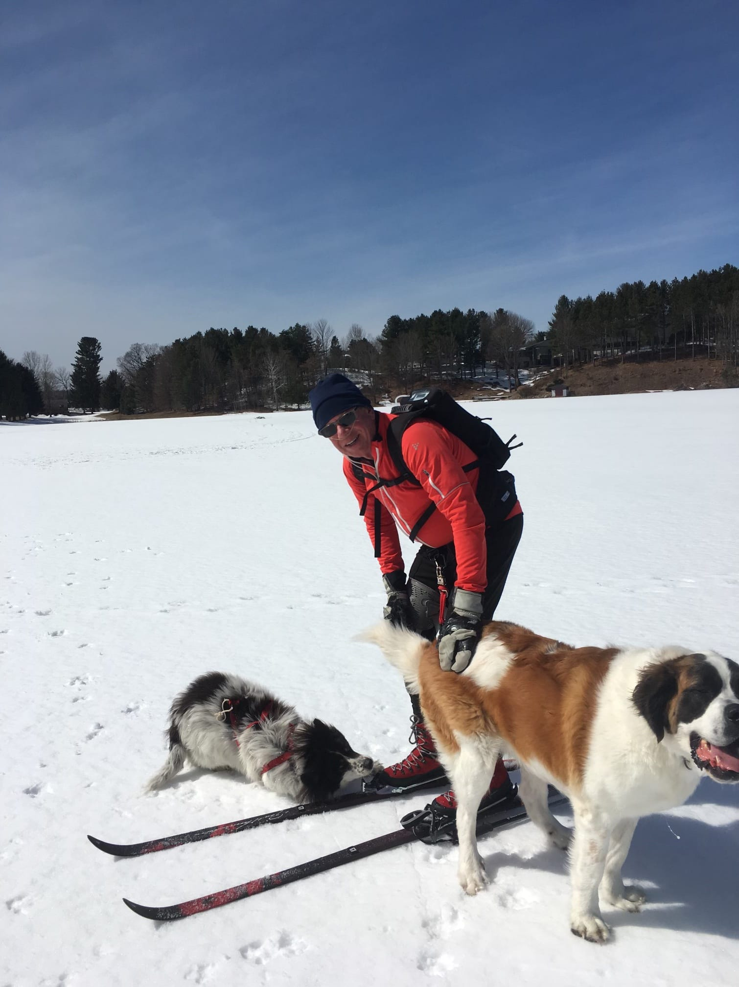 Man skiing with two dogs