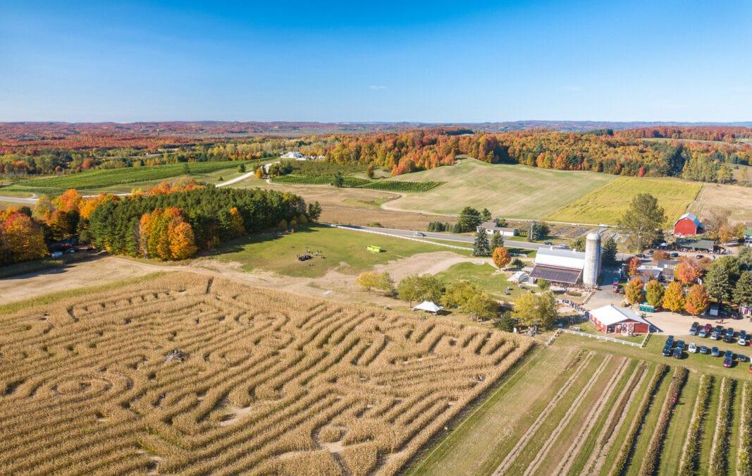 Corn maze at Jacob's Farm in Traverse City